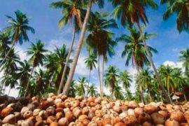 Kemenperin Dorong Pengembangan Kelapa di Gorontalo