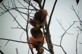Aktivis serukan pelestarian enam spesies burung endemik Raja Ampat