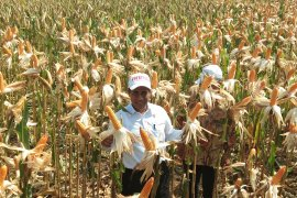Minister of Agriculture: Swamps will realize Indonesia as world food barns 2045