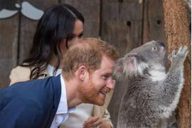 Harry dan Meghan dapat hadiah untuk bayi dan bertemu koala di Australia