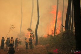 Api di Gunung Ciremai hanguskan area 495 hektare