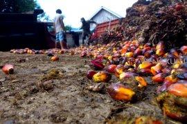 Selama Maret, harga sawit di Mukomuko dua kali alami penurunan