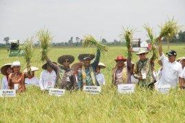 Kalsel cetak sawah 200 hektare tahun depan