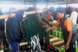 Anjlok, harga ikan nelayan Jembrana
