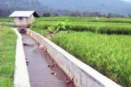 Petani Pesisir Tangerang Kesulitan Air Saluran Irigasi