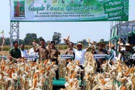 HKTI sebut sistem tanam rapat tingkatkan produktivitas jagung