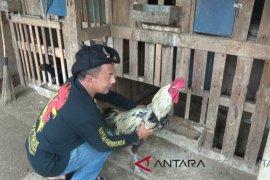 Warga Sukabumi manfaatkan pekarangan rumah untuk beternak