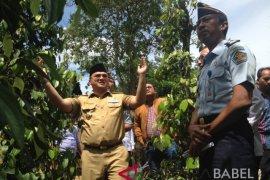 Gubernur Babel minta petani Mapur ajukan bantuan lada