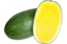 Mahasiswa Polbangtan Bogor kembangkan budidaya semangka kuning