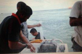 BKIPM Jambi lepasliarankan kembali 95.876 benih lobster (video)