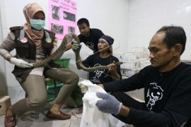 Ekspor ular ke Guangzhou