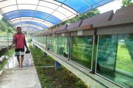 Atasi kelangkaan DKP Jambi jaga pembibitan ikan arwana Batanghari