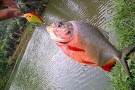 Pemkab Lebak Genjot Produksi Ikan Air Tawar