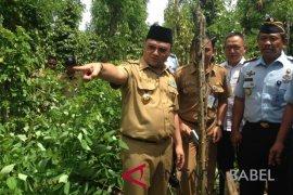 Gubernur Bangka Belitung heran petani tolak pabrik sawit