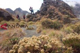 Jalur pendakian Rinjani Lombok Tengah resmi dibuka