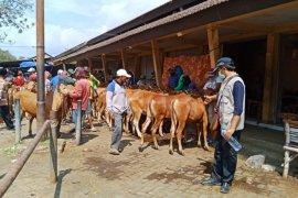 Dukung Ketahanan Pangan, Probolinggo Tingkatkan Populasi Ternak