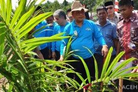 Aceh Barat luncurkan program peremajaan kelapa sawit