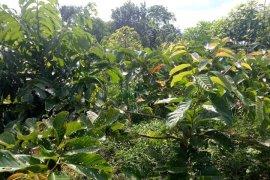 Pegiat Sungai Samarinda Berhasil Tanam 7.000 Pohon