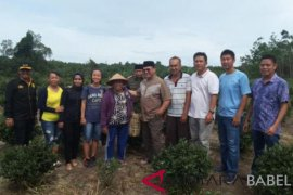 Gubernur Erzaldi tinjau perkebunan teh di Dusun Tayu