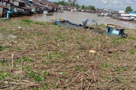 Pemkot Banjarmasin kewalahan bersihkan sampah sungai Martapura