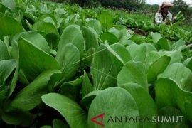 Taman Simalem Resort bina petani organik Karo