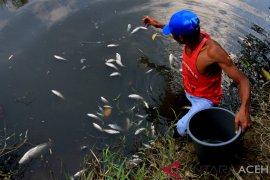 Diduga tercemar limbah, ratusan ikan mati mendadak di Nagan Raya