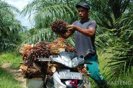 Indonesia-Malaysia sampaikan keberatan soal sawit ke Uni Eropa