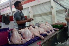 Diprediksi harga ayam akan naik hingga tahun baru