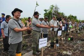 Pemulihan ekosistem hutan bakau butuhkan kolaborasi