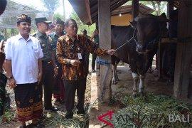 Bali panen 48.222 ekor Pedet, PLN peduli Curik