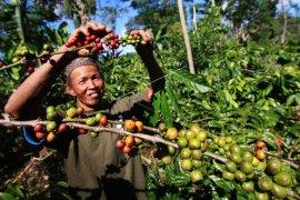 Indonesia peringkat ke-4 produsen kopi dunia