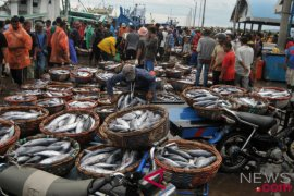 Stok ikan Kaltim aman sambut Tahun Baru 2020