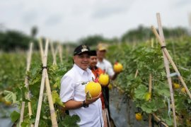 Varietas premium kunci keberhasilan petani Teluk Naga