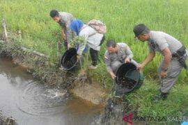Satpol-PP HST sita ribuan anak ikan di Pasar Keramat