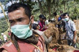 Menyelamatkan padi dari reruntuhan tanah longsor