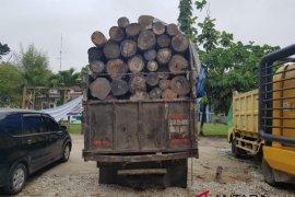 BBKSDA Riau ringkus pemodal dan pembalakan liar di Pelalawan