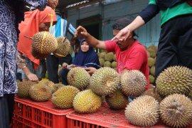 Wisata Belah Durian