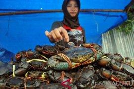 Maluku ekspor kepiting bakau ke Malaysia dan Singapura
