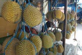 Pemungut Durian Di Lebak Ramai Di Hutan