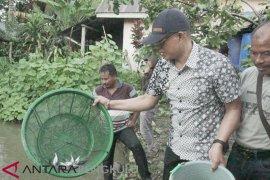 Pemkab Bengkulu Selatan minta BUMDes maksimalkan potensi patin