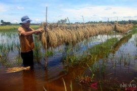 Petani Karawang diimbau waspadai banjir
