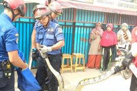 Pemadam Jaktim selamatkan ular sanca di saluran air