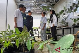 Distan Kalbar kembangkan Durian Serumbut asal Sekayam