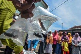 Ikan Cupang Cegah DBD