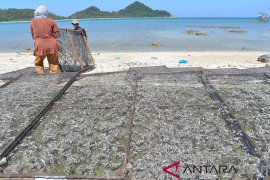 Produksi ikan asin terkendala bahan baku