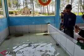 Nelayan Bengkulu Tengah tangkarkan empat jenis penyu
