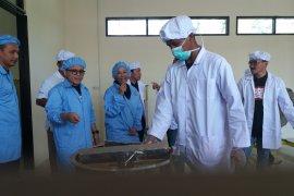 Menteri Rini Resmikan Pabrik Cokelat Perkebunan Kendeng Lembu Banyuwangi (Video)