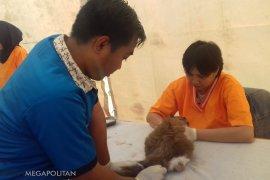 PDHI berikan vaksin rabies dan konsultasi gratis