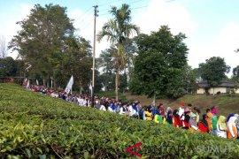 Ribuan karyawan PTPN 4 jalan sehat