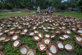 Petani di Ambon keluhkan harga kopra
